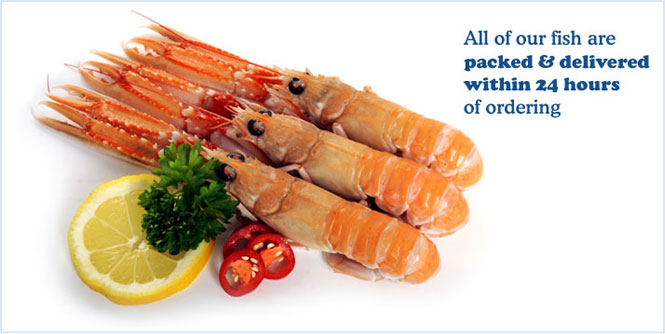 All of our fish are packed & delivered within 24 hours of ordering